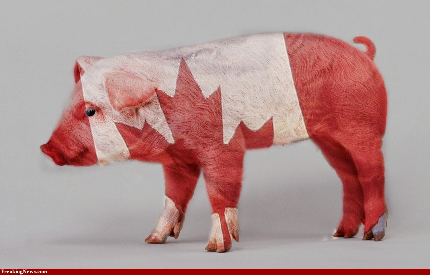 Canadian-Bacon-58243